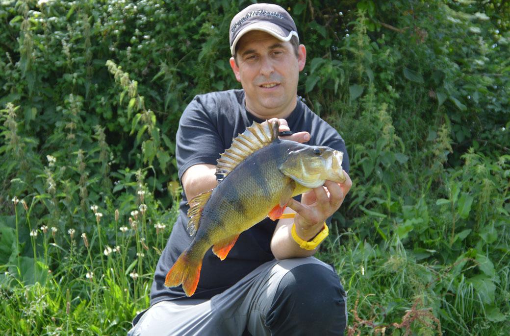 drop shot fishing for perch | Crazy hooks by Matt Pickup